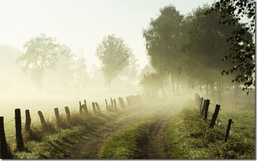 morning-mist-breeze-cool-jungle-mist-morning-path-wild1-600x375