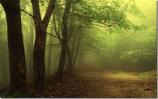 nature-trees-jungle-600x375